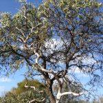西オ-ストラリア環境問題にも貢献、植樹体験!!