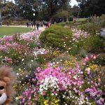 人々の憩いの場所お花溢れるキングスパーク!!