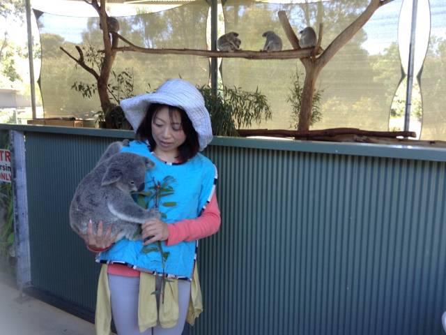 パースで唯一コアラ抱っこコフヌコアラパークへ!抱っことランチ付A$155 Image5