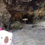 パースの素晴らしさを感じられる島!!今話題のペンギン島を探検!!!