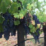 オーストラリアの美味しいワイン