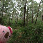 西オーストラリアの魅力を伝え隊、パート3、遂にポロンガラップ国立公園へ!