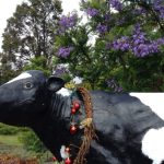 牛好きの方に捧げるパース南、地元の方に人気カウタウン!