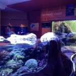 パースのアクア水族館とインド洋で海釣りに挑戦!!