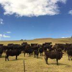 西オーストラリアの和牛
