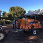 スワンバレーにてワイン用ぶどう収穫のお手伝い体験