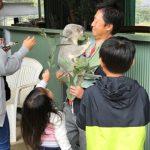 家族でコアラ抱っこ~