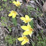 ドリプラオリジナル2泊3日ワイルドフラワー,カルバリ国立公園ツアー