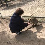 親子で仲良く,コフヌコアラパークでコアラ抱っこ