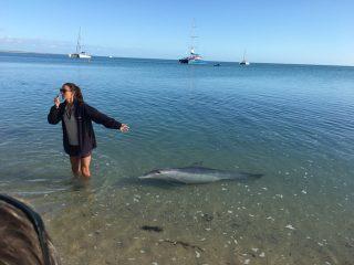 世界遺産シャークベイと西オーストラリアの秘境カルバリ国立公園を巡る感動の旅4日間