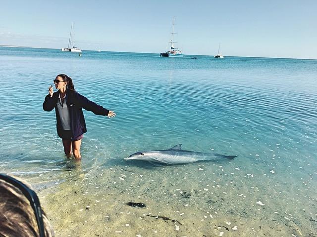 世界遺産シャークベイと西オーストラリアの秘境カルバリ国立公園を巡る感動の旅4日間。