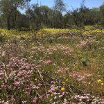 DAY5 ワイルドフラワーのベストシーズンに北へお花を探しながらの4泊5日の旅