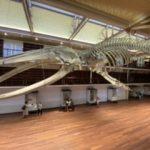 西オーストラリア博物館リニューアルオープン